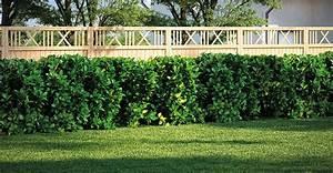heckenpflanze wahlen hecke pflanzen obi gartenplaner With garten planen mit künstliche hecke balkon