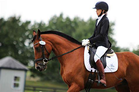 lessons training riding horse horseback king