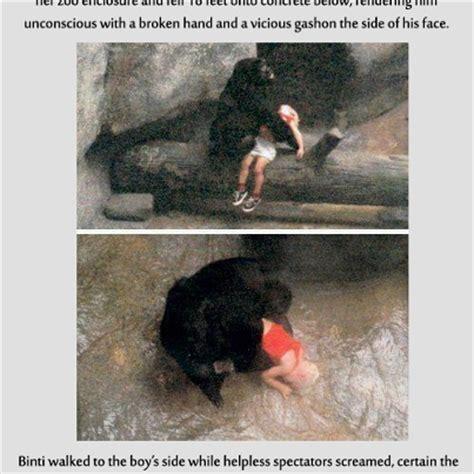 Binti Jua, An 8yearold Female Gorilla, Rescued A Three