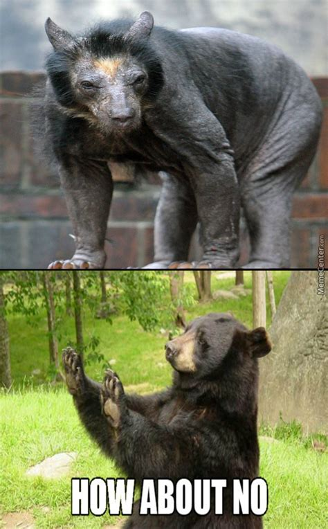 Hairless Bear Meme - a hairless bear something from a nightmare by dznutz meme center