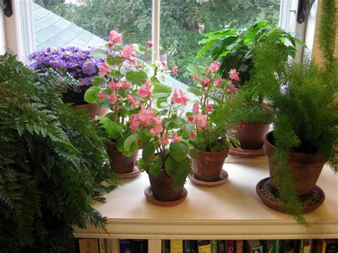 Windowsill Flower Garden by Steps To A Window Garden