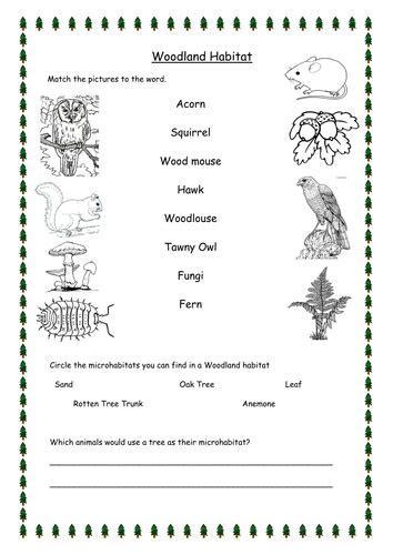 useful plants habitat worksheets for grade 1 on woodland