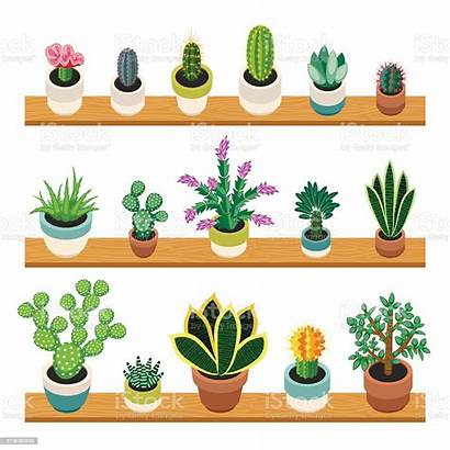 Succulents Pots Shelves Cactuses Cactus Shelf Plant
