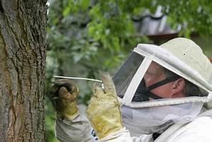 Ameisenplage Im Haus : ameisenplage in haus und garten was tun bei akutem ameisenbefall ~ Orissabook.com Haus und Dekorationen