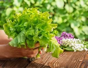 Wann Erntet Man Knoblauch : salat ernten wann wie macht man das am besten ~ Lizthompson.info Haus und Dekorationen