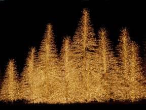 christmas trees christmas wallpaper 2736137 fanpop