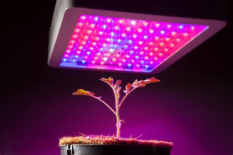 best indoor led grow lights reviews 5 types of indoor grow lights explained guide with