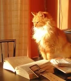 cat book file cat with book 2320356657 jpg