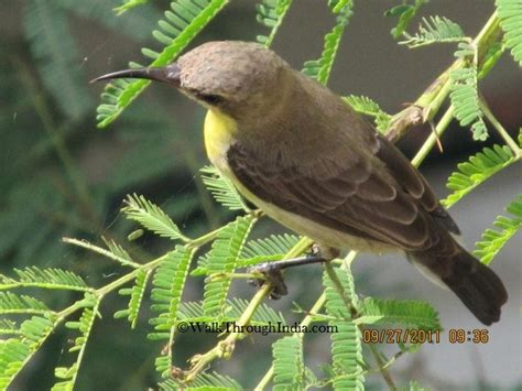 bird spots in southern india 15 most common city birds of india