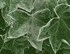 Welche Kräuter Sind Winterhart : die besten 25 k belpflanzen winterhart ideen auf pinterest winterhart balkon pflanzen ~ Pilothousefishingboats.com Haus und Dekorationen