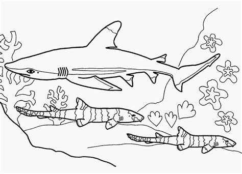 tiere für kinderzimmer ausmalbilder hai kostenlos 920 malvorlage alle