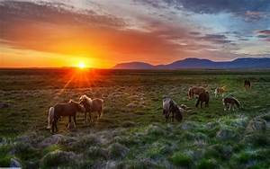 Animals Wallpaper HD - Horse Sunset Wallpapers Picture at ...