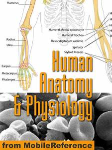 Pdf Download Human Anatomy And Physiology Study Guide Free