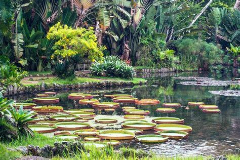 gainesville botanical gardens gainesville area b b archives hton lake bed