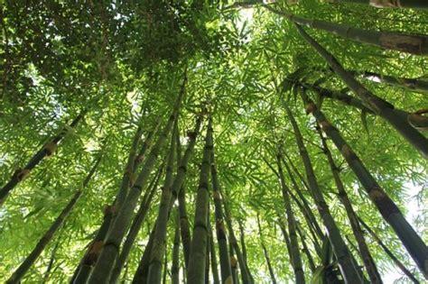 Tropical Rainforest Biome Location, Temperature