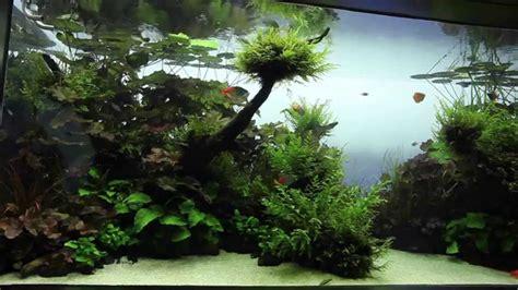 Visite  Live Planted Aquarium  Aquascape Par Aqua Design