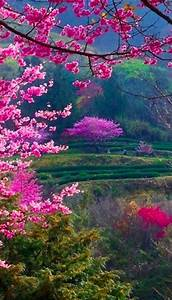 Cherry blossoms | Garden | Pinterest | Beautiful, Nature ...
