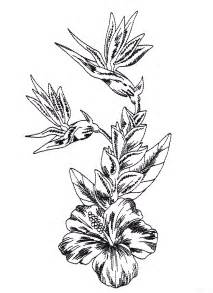 Tuscan Bedroom Decorating Ideas Tropical Flower Drawing Sketch Coloring Page View Larger Image Loversiq