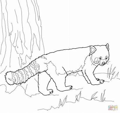 Panda Coloring Roux Coloriage Drawing Imprimer Face