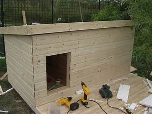 bauplan fur eine hundehutte With how to build a dog house cheap