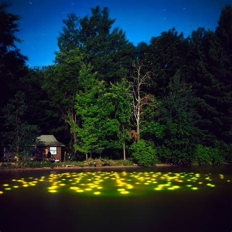 amazing landscape light installations by barry underwood