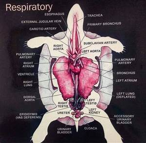 Carnation Anatomy Diagram