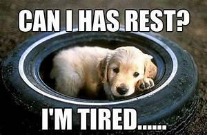 Tired Pup Meme | Slapcaption.com | animals | Pinterest ...