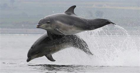 Zemūdene.: Jūrā pie Klaipēdas novēroti delfīni