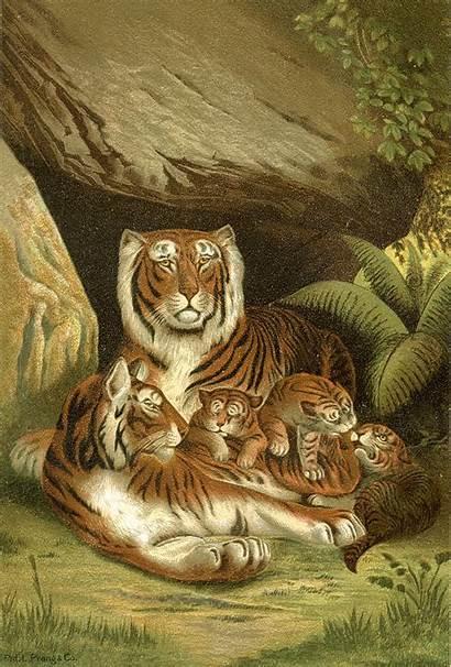 Printable Tigers Tiger Fairy Animal Antique Graphics