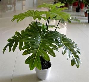 Aliexpress.com : Buy wholesale(13 leaves/pcs)Taro leaves ...