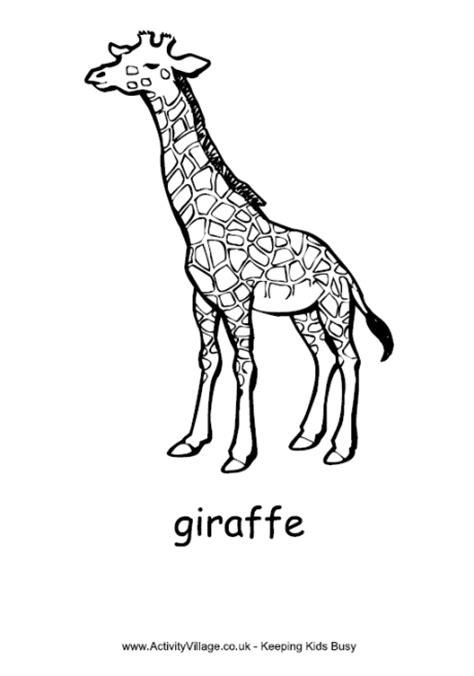 giraffe colouring page