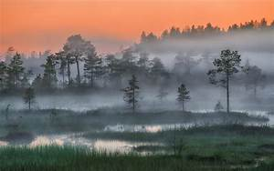 Nature  Landscape  Russia  Forest  Mist  Trees  Sunset