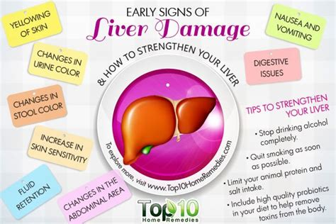 10 Early Signs of Liver Damage & How to Strengthen Your Liver   Top 10 Home Remedies