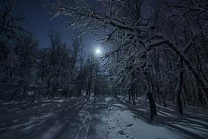 winter forest snow road night moon light HD wallpaper