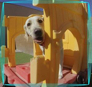 doggie district marks 10 years of providing care for las With dog day care las vegas
