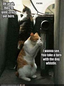 Funny Dog Photos with Captions #4 | Motley Dogs
