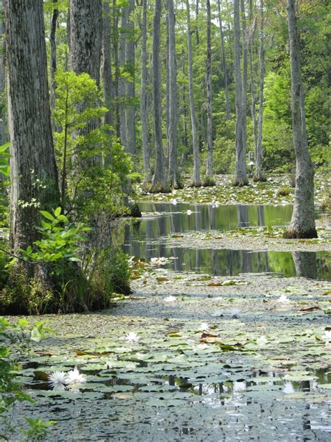 cypress gardens sc 12 cool things to do in south carolina scoutology