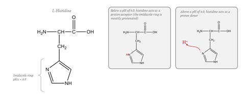 Buffering In Acute Respiratory Acid-base Disturbances