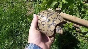 enclos de jardin pour tortue terrestre youtube With modele de rocaille pour jardin