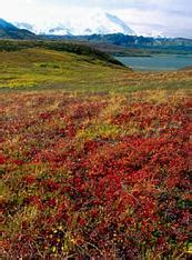 earth floor biomes tundra arctic tundra earth floor biomes autos post