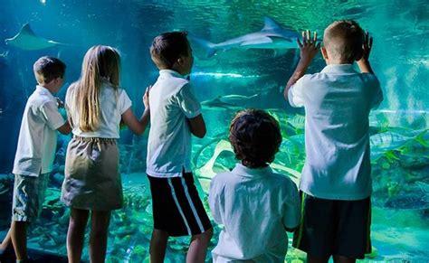 entr 233 e aquarium sea moins ch 232 re 11 euros tarif unique