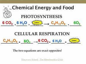 What Is The Chemical Equation For Cellular Respiration Video