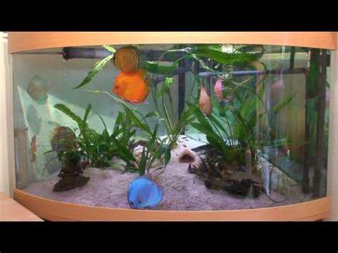 Diskus 360 L Aquarium Youtube