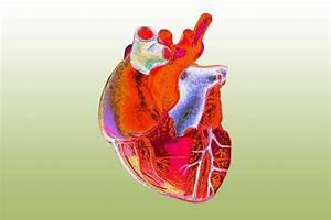 Xenotransplantation And Organ Donation  U2014 Science Learning Hub