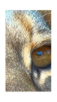Kenya 3D: Animal Kingdom IMAX - Official trailer - YouTube