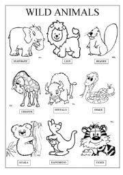english worksheet wild animals animals pinterest