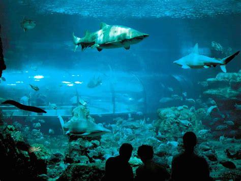 visiter barcelone aquarium de barcelone
