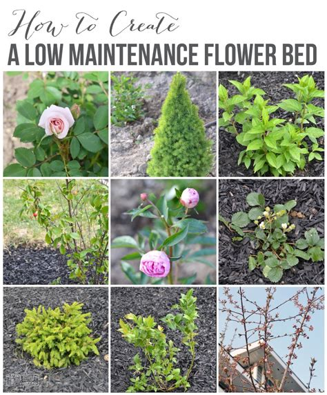 create a low maintenance flower bed our front yard