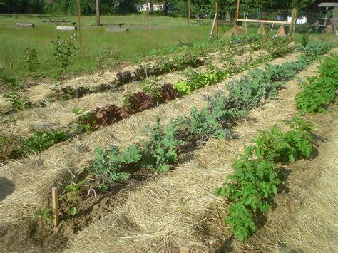 mulch gardens the sharing gardens more on mulch
