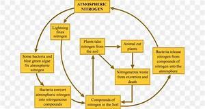 Nitrogen Cycle Wiring Diagram Microorganism Electrical